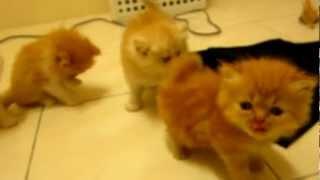 Anak Kucing Usia Sebulan