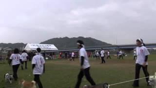 2013.11.17運動会で披露された松山支部の白虎隊チームです。