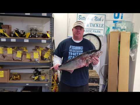 5 21 16 Ray Zirilli 13 Pound Bluefish