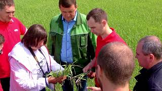 Фунгицид Аканто® Плюс – профессиональная защита сельскохозяйственных культур.