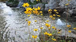 아름다운 연못~조경 시설물