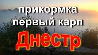 Рыбалка на Днестре /прикормка/первый карп