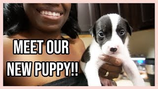 WE GOT A DOG!! | OUR PUPPY'S FIRST DOCTOR VISIT + FIRST BATH