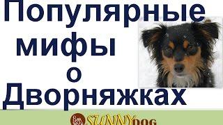Мифы  о собаках Дворняжки   самые умные, самые лучшие и здоровые  Миф или реальность