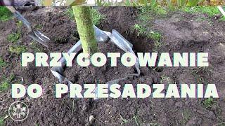 Jak przygotować drzewa do wiosennego przesadzania?