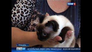В Ростове кошки лечат детей с аутизмом, ДЦП и синдромом Дауна