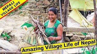 Amazing Village Life of Nepal   Daily  Himalayan Nepali Life   IamSuman  