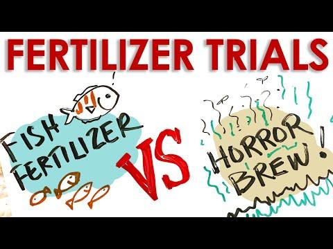 Fish Or Foul? Organic Fertilizer Trial - Part 1 || Black Gumbo
