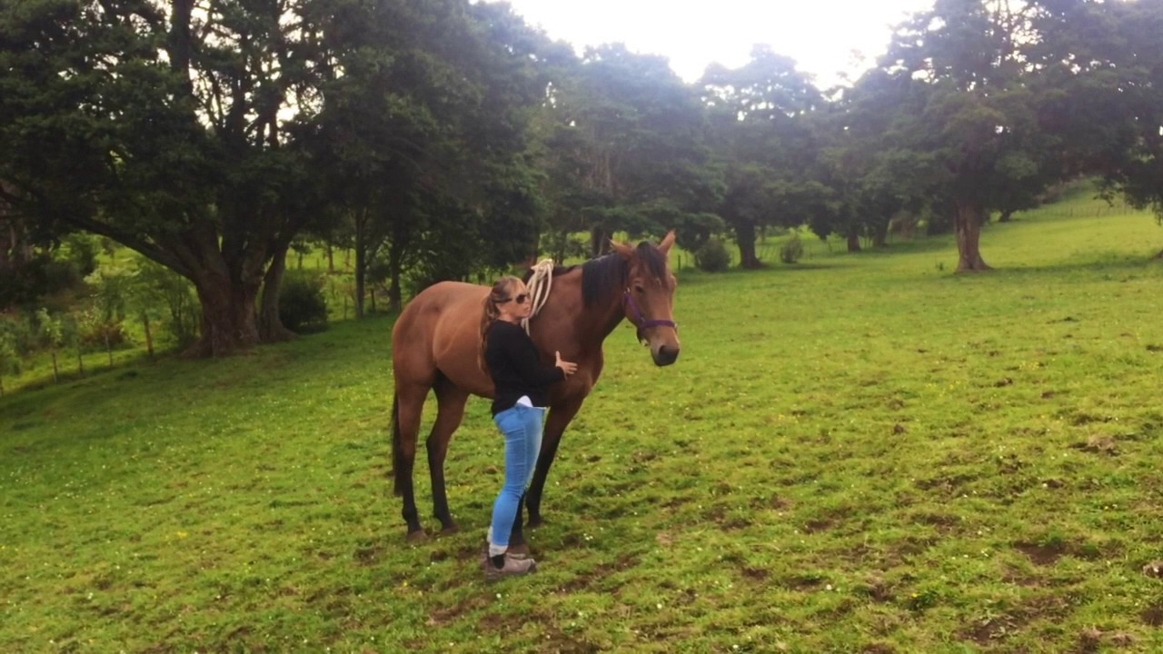 """an introduction to the nature of horse This is """"the attention-getter: the first step of an your entire introduction should only be 10 to 15 percent of because of its specific nature."""