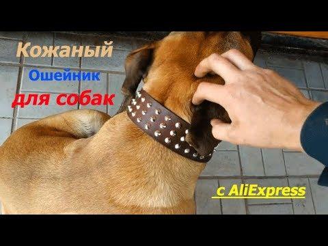 Кожаный Ошейник для собак с Aliexpress!