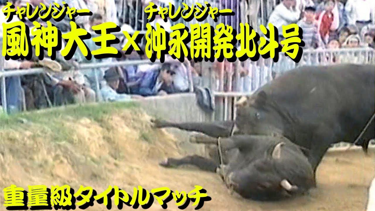 風神大王x沖永開発北斗号(重量級タイトルマッチ)1997.11.9 【沖縄闘牛】