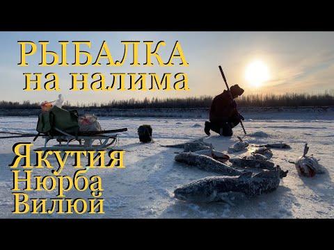 Рыбалка на налима Якутия Нюрба Вилюй