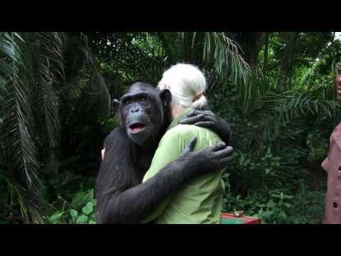 Jane Goodall Releases Chimp. Bir heyvanin Bir insana sevgisinin bu qeder boyuk olduqun gorun.
