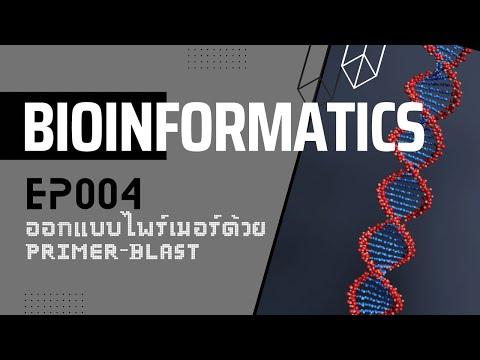 Bioinformatics [ 004 ] : การออกแบบไพร์เมอร์ และการใช้ Primer-blast