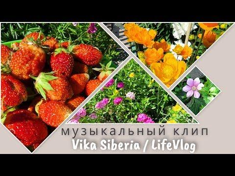 Клип 1: Приятная музыка на канале Vika Siberia / LifeVlog