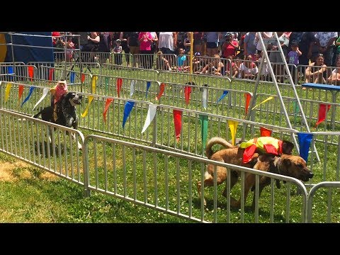 The Banana Derby - Monkeys Racing on the Backs of Dogs - Full Show (07-13-19)