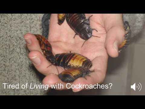 Pest Control in Jacksonville FL CALL (904) 479-6498