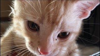 どうなる!?とんでもない所で寝てしまった子猫の悲劇 thumbnail