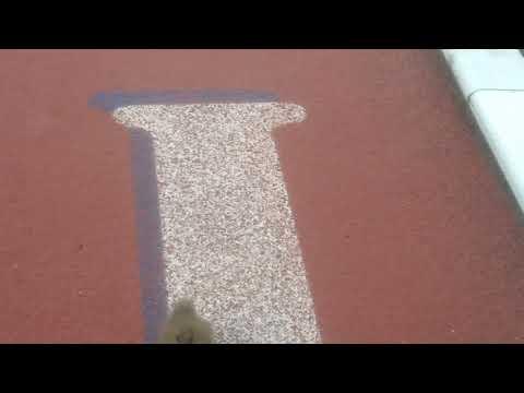 Ducky Day 15   Cit Cit Running 100m