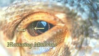 2756【03】Leonardo of Half Blind片目のダビンチ+半分盲目だったダビンチ説by Hiroshi Hayashi, Japan thumbnail