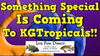 new-fish-for-kgtropicals-big-things-are-coming