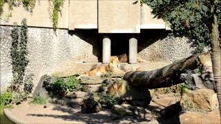 Amsterdam Zoo (Artis) Compilation (1080p)