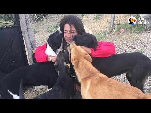 Woman Gives Up Everything To Save All The Stray Dogs | The Dodo