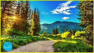 Beautiful Relaxing Music for Stress Relief ~ Meditation Music, Sleep Music, Ambient Relaxing Music