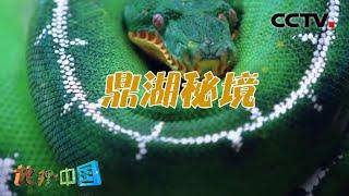 《地理·中国》 20201103 奇特的山谷·鼎湖秘境| CCTV科教 - YouTube