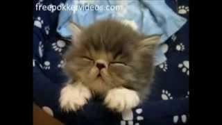 Смешные, милые котята спят - очень нежно