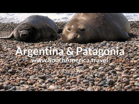 Scuba Diving in Valdes Peninsula, Puerto Madryn, Argentina