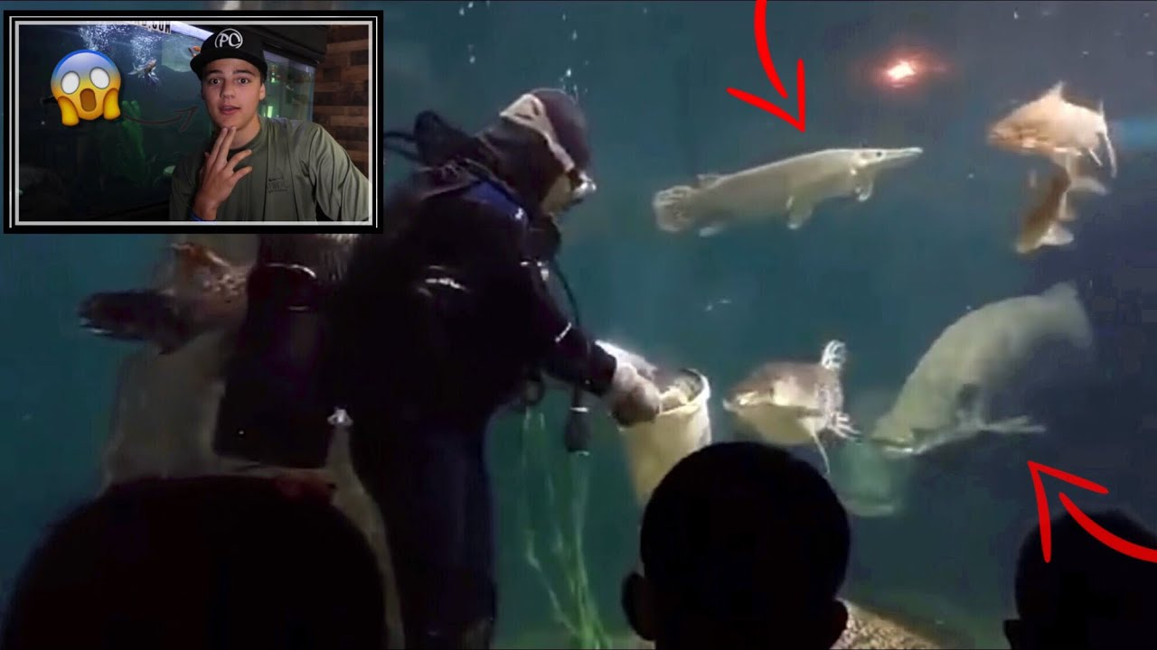 reacting-to-the-worlds-best-fish-feedings-2