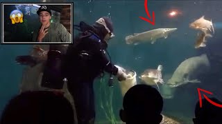 REACTING to the WORLDS BEST FISH FEEDINGS 2!!!