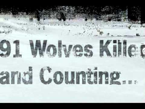 Alaska Aerial Wolf Shooting Animation