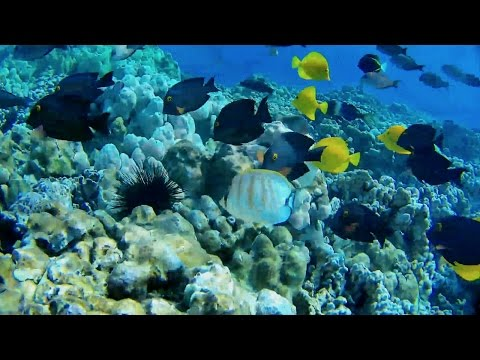 OpenROV Trident: Dive in Hawaii (January 2017)