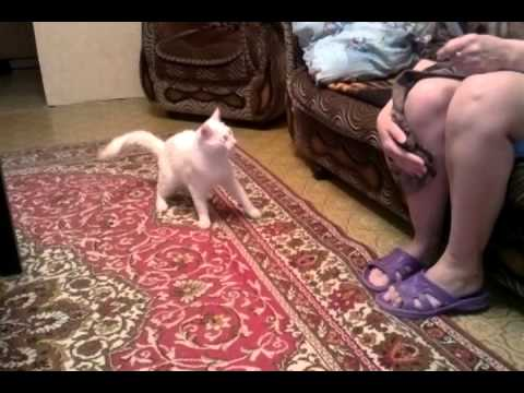 Cat Can't Live Without His Master's Ankle!