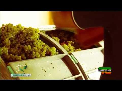Pianeta Verde: 1701, il primo vino biodinamico della Franciacorta - 27.11.2017