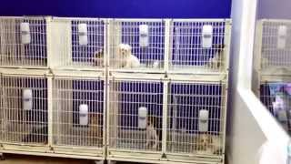 PUPPY  STORES IN MIAMI .DORAL FL.(, 2013-05-26T21:16:54.000Z)