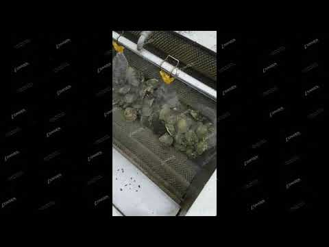 Oysters Cleaning Machine/Mussel Washing Machine/Shell cleaner