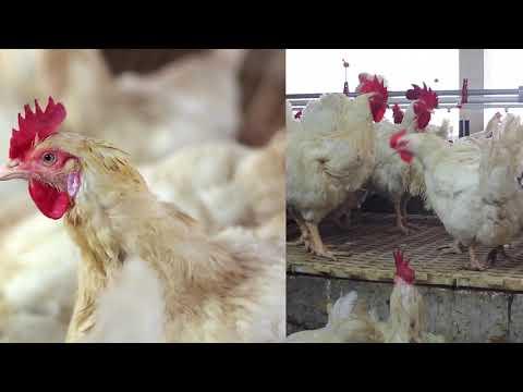 Nourish Agro Ltd- Bogra Feed Mill