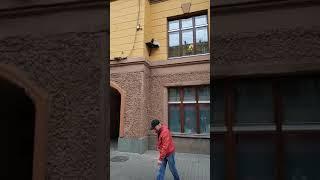 Памятник коту Елисею на Малой Садовой улице, Санкт-Петербург