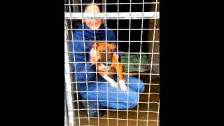 Binfield Dog Rescue - Rosie Needs A Home - Puppy Staffie Cross