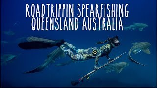 Spearfishing QLD Australia: Sharks + Cobia + Jacks + Jew + Marlin (Underwater Ally Adventures) Ep.16