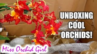 Unboxing some seriously cool Orchids!