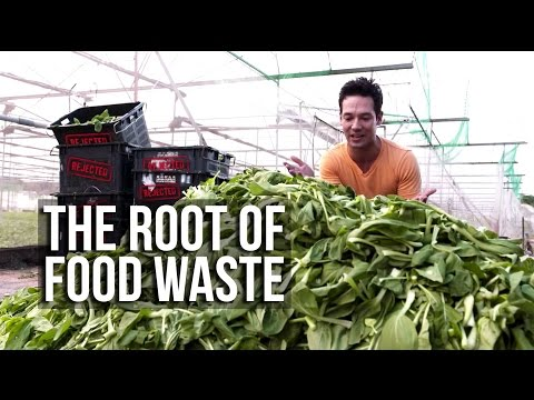The Root Of Food Waste | It Figures | Channel NewsAsia Connect