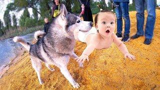 ХАСКИ УТАЩИЛ РЕБЁНКА / СКРЫТАЯ КАМЕРА / собака дайвер / влог: дети и собаки