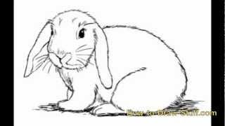 draw bunny step rabbit drawing easy realistic sketch drawn line cartoon drawings rabbits sketches pencil splendi paintingvalley coloring watercolor explore