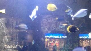 Giant fish aquarium inside Bellagio Shopping Center, Las Vegas - Nov 22, 2011 1:26 PM