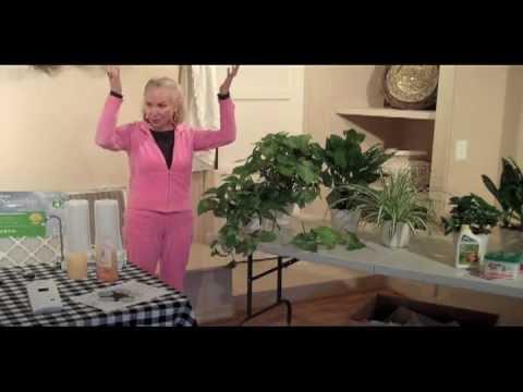 Suzee Miller on Indoor Plants