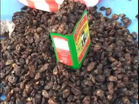 Gastronomia da Guinea Bissau - CPLP Guiné Bissau